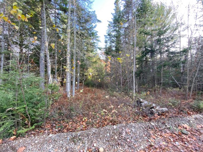 Castlewood Rd 5.3 Acres – Newcastle